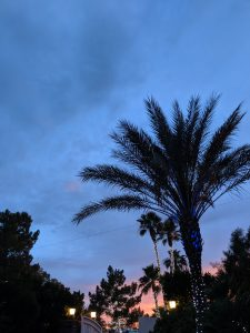Summer nights, sunsets, palm trees, Las Vegas wedding, summer wedding, romantic