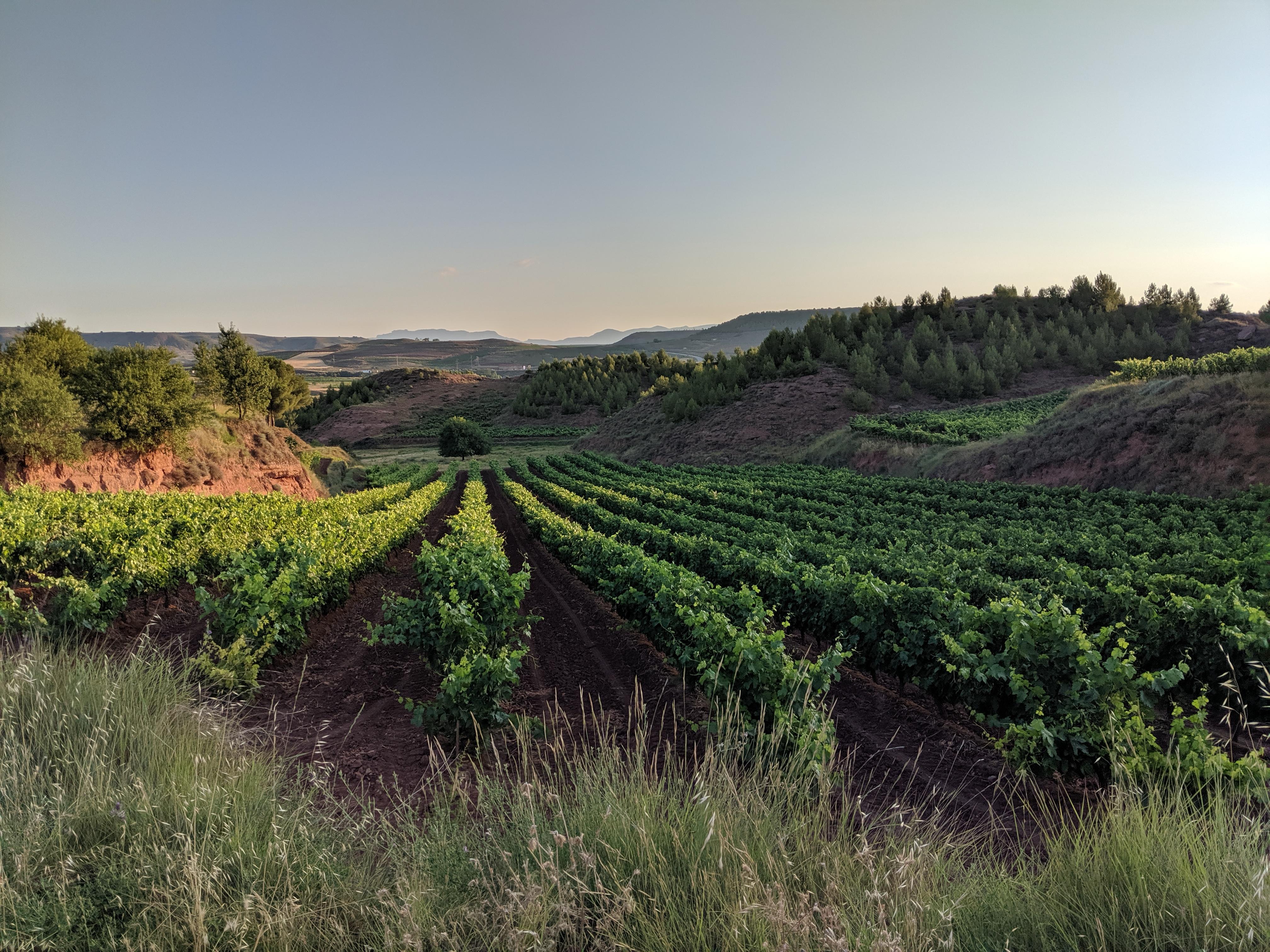 Spain, Spanish countryside, el Camino