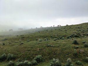 wild horses, Camino Frances, pilgrims, hiking