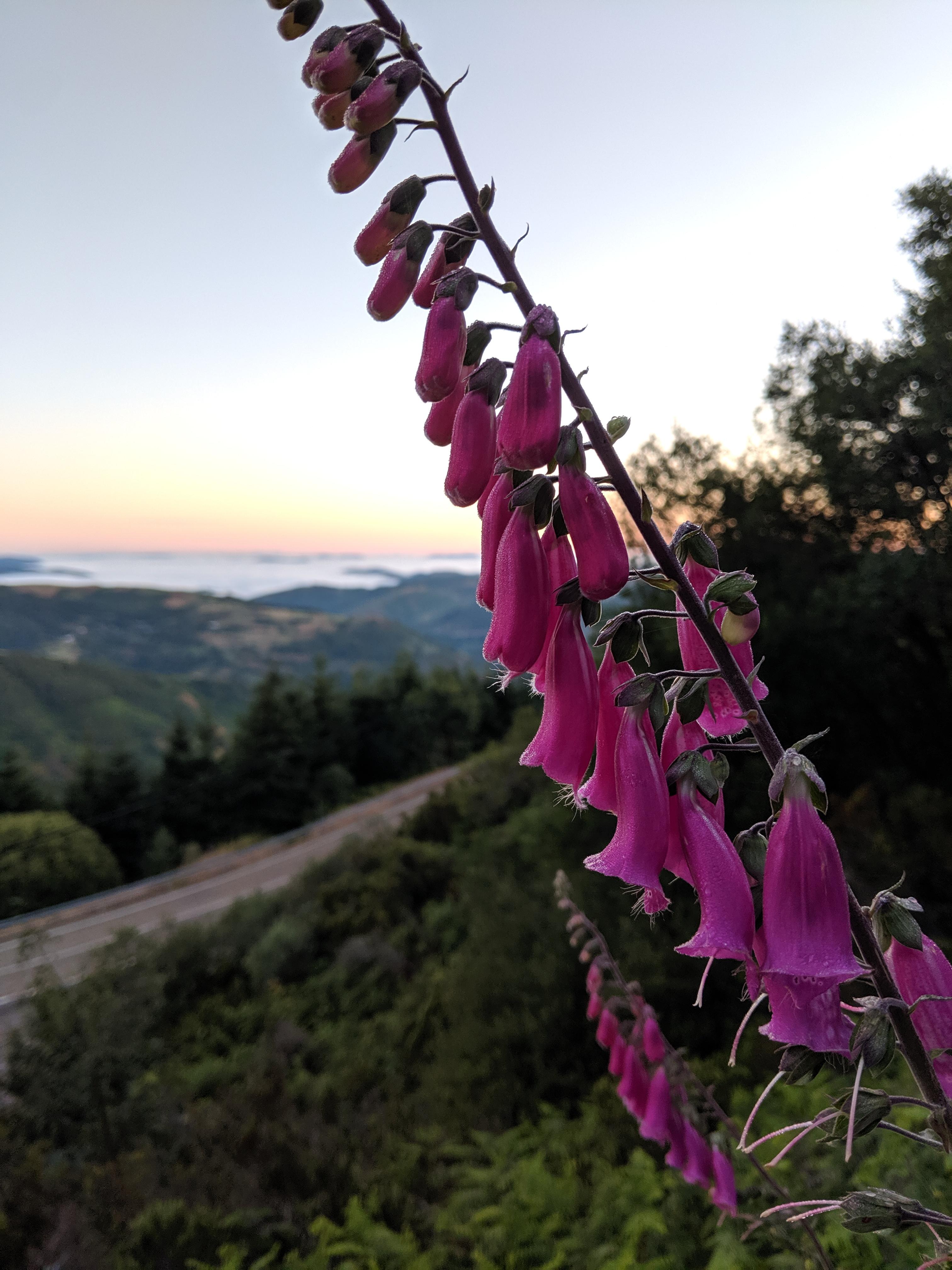 Galicia, Spain, O'Cebreiro, Camino de Santiago