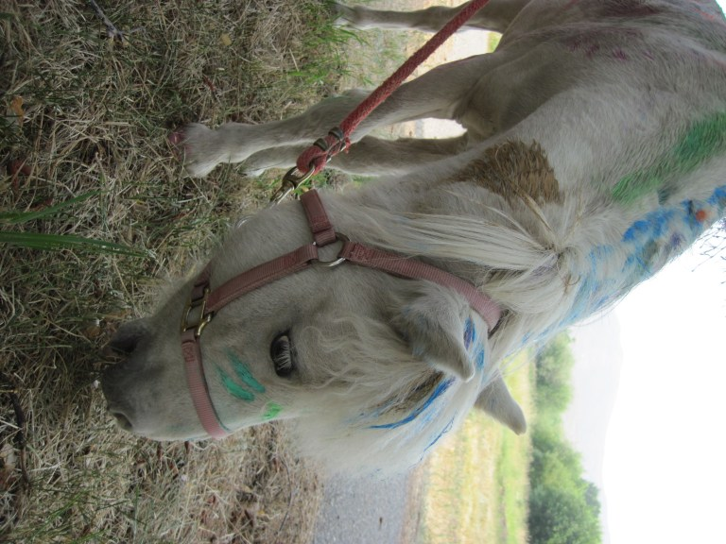 swiftsure-ranch-idaho-nonprofit-camp-rainbow-gold